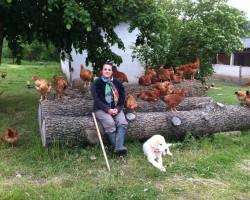 Les poulets de celine